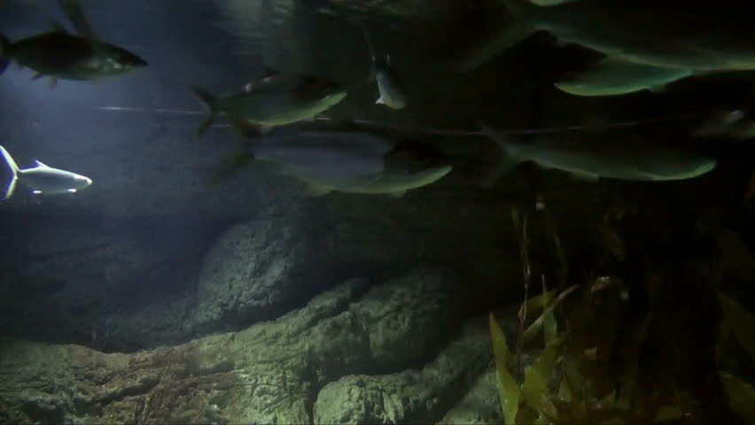 Stock Video Of Fish Swimming Underwater Camera Towards Surface
