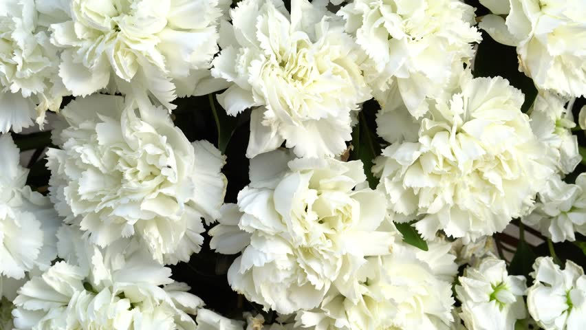 Image result for white carnations