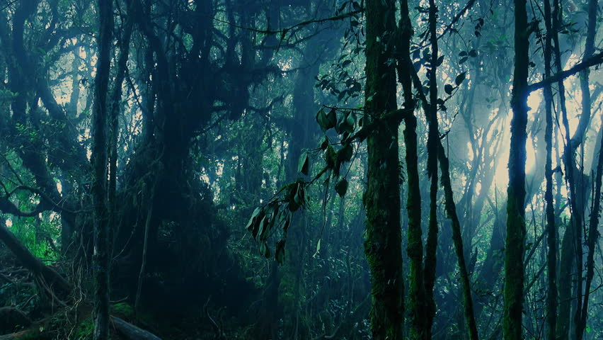 Gloomy tropical forest shrouded in mist and overgrown with shrubs and mossy trees. Sinister woods covered with fog. Frightening nature of somber Malaysian rainforest. Camera stays still.