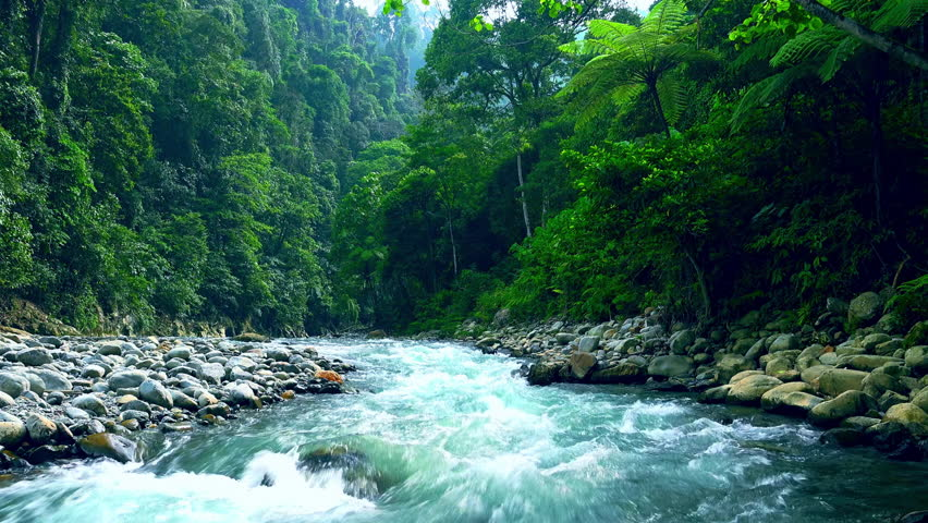 Mysterious mountainous jungle with trees leaning over fast stream with rapids. Magical scenery of rainforest and river with rocks. Wild, vivid vegetation of tropical forest. North Sumatra, Indonesia. | Shutterstock HD Video #26312138