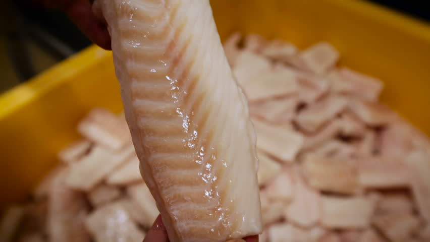 Fish Processing. Person Inspecting Piece of Fish. Man Holding White Flash in Hand. Yellow Container With Product on Table. Closeup | Shutterstock HD Video #26336885
