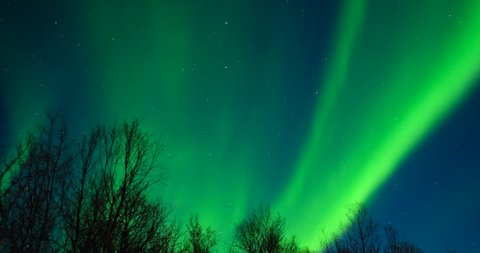 Northern Lights, polar light or Aurora Borealis in the night sky over Senja island in Northern Norway with trees n the foreground.