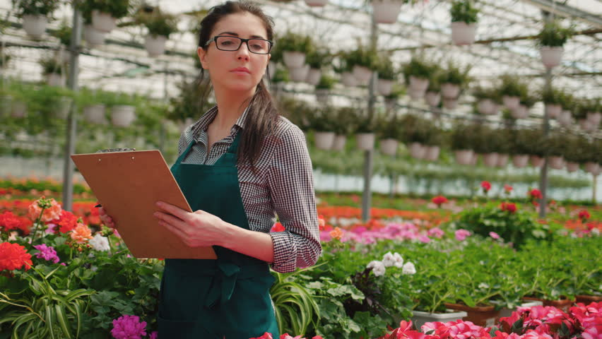 Beatiful florist woman checking and counting the flowers in a greenhouse.