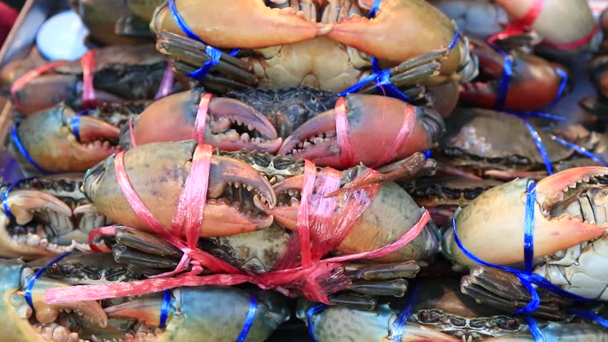 Serrated mud crabs, crabs were tied with rope on a panel at the Chinatown Yaowarat road ,Bangkok , Thailand. Black and red or dark brown. Animal economically preferable to cooked food.