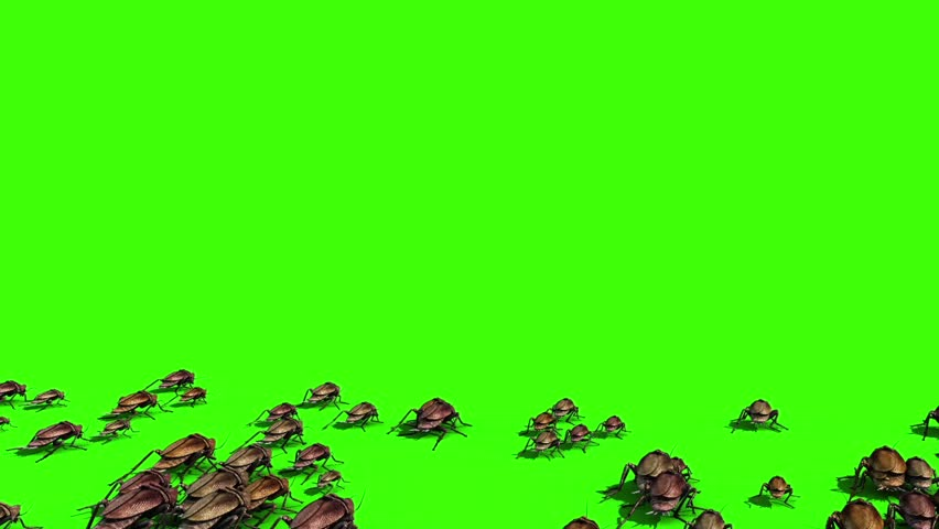 Roaches Invasion Beetle Insects Green Screen Back 3D Rendering Animation