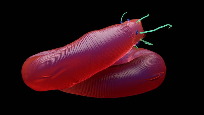 3d rendering - Nematode worm