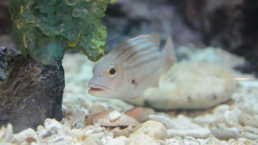 Tropical Fish On A Tropical Coral Reef, Stock Footage Video ...