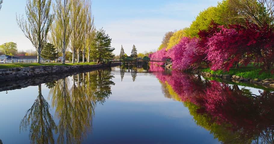 Flowering Crabapple trees reflected in scenic river, Springtime morning.