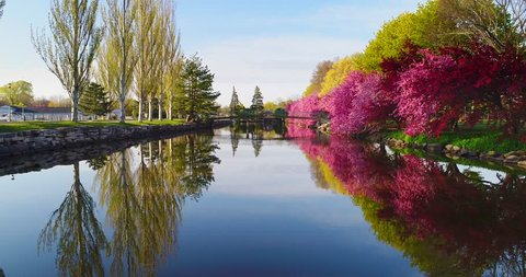 Flowering Crabapple trees reflected in scenic river, Springtime morning.