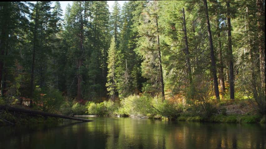Fallen tree in river | Shutterstock HD Video #26904805