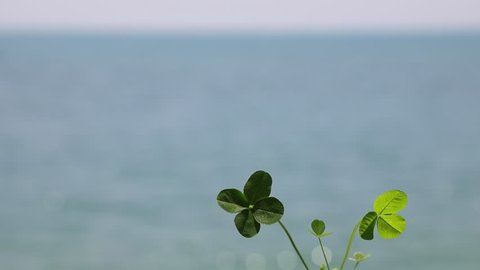 Four leaf clover and the blue sea