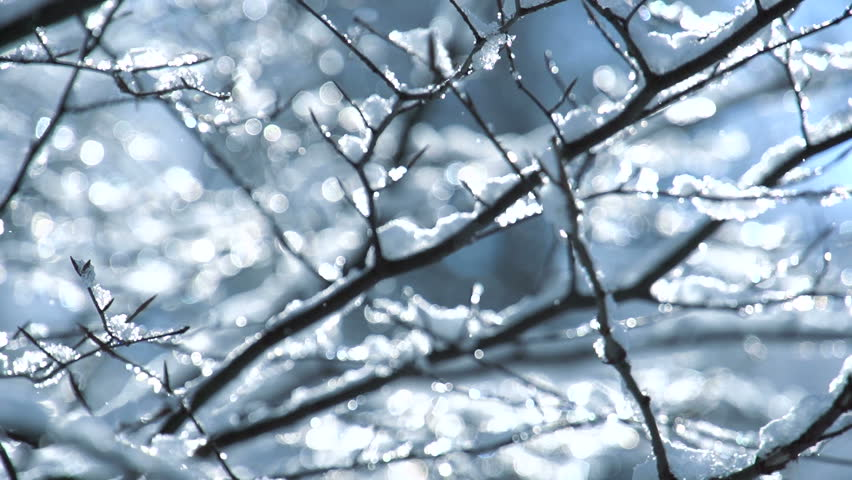 snow falling on leafless tree branches in slow motion. winter christmas season background