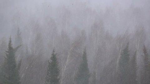 Snow storm, heavy snow