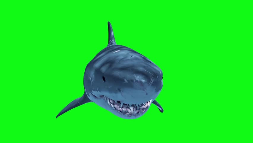 White Shark Attack Loop Front Green Screen 3D Rendering Animation | Shutterstock Video #27019339