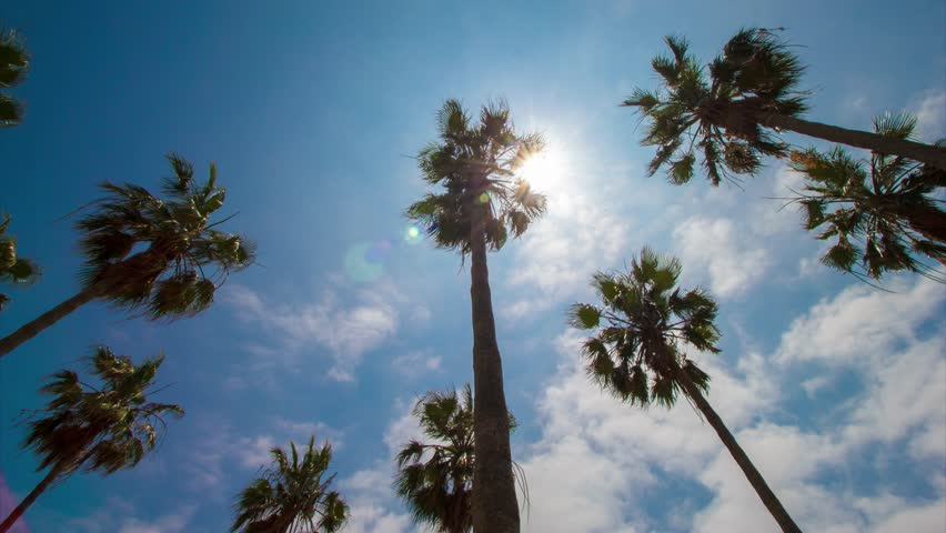 Palm trees from below on clear blue sky background. 4K time lapse. Summer sun through tree leaves and lens flare. Vacation concept. 42
