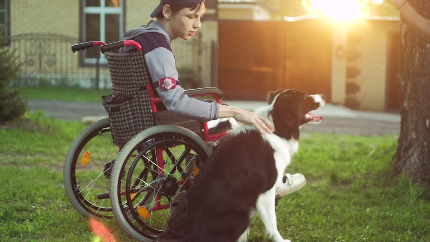 A disabled person plays with a dog, canitis therapy, disability treatment through training with a dog, Man in a wheelchair 4k