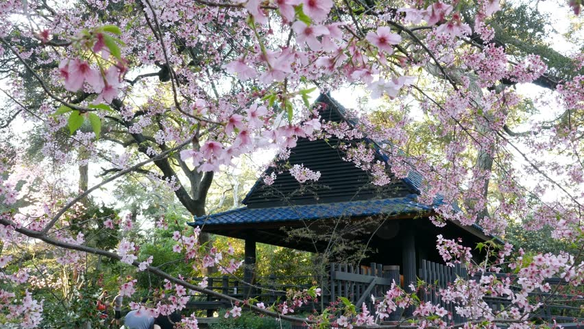 Los Angeles Japanese Garden: APRIL 8: Himeji Castle And Cherry Blossom