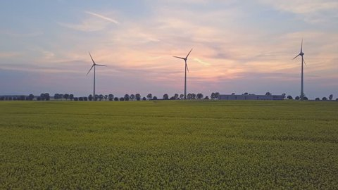 Aerial drone shot of wind turbines at sunset over yellow rape flowers field. Renewable clean energy from wind farm, power generators, sustainable business concept. Drone move left to right.