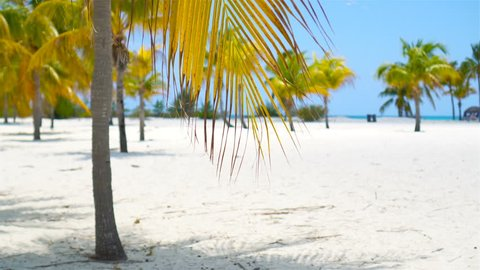 Palm trees on white sand beach. Playa Sirena. Cayo Largo. Cuba.
