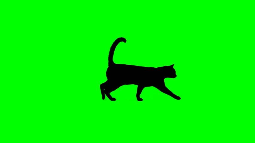 Cat silhouette walking on green screen Loop