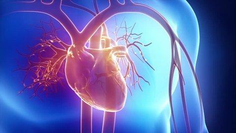 Beating human heart