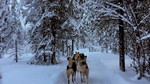 Riding husky sledge in Lapland landscape