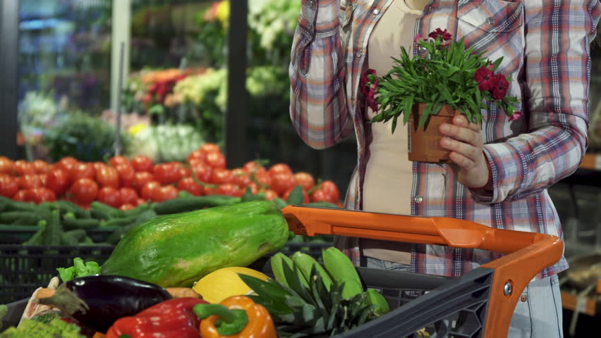 Low shot of woman choosing houseplant at the hypermarket. Close up of girl in checkered shirt putting flowerpot with red flower into the shopping cart. Female customer walking away with indoor plant | Shutterstock HD Video #27815785