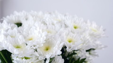 close-up, view from above, lowers, bouquet, rotation, floral composition consists of white Chrysanthemum Chamomile bacardi.