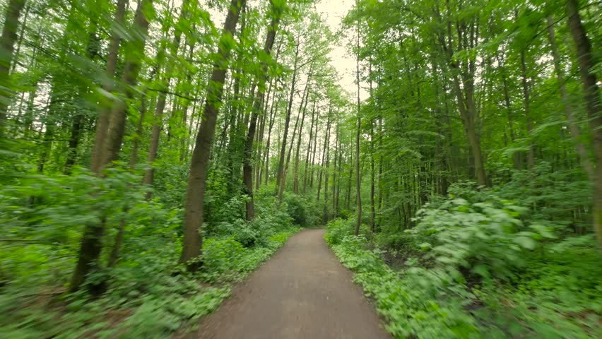 Person riding bike in the forest. Smooth flycam/gimbal shot of sport activity. | Shutterstock HD Video #27996625