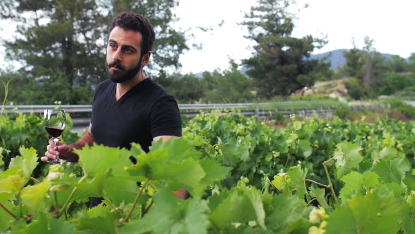 A young winemaker go through his winery, inspect the leaves and drink his red wine