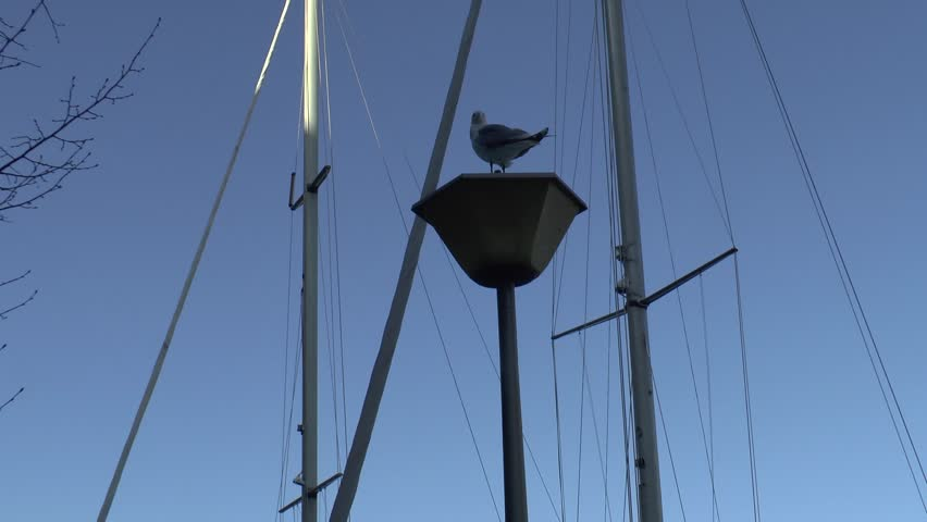 Seagull sitting on the street lamps
