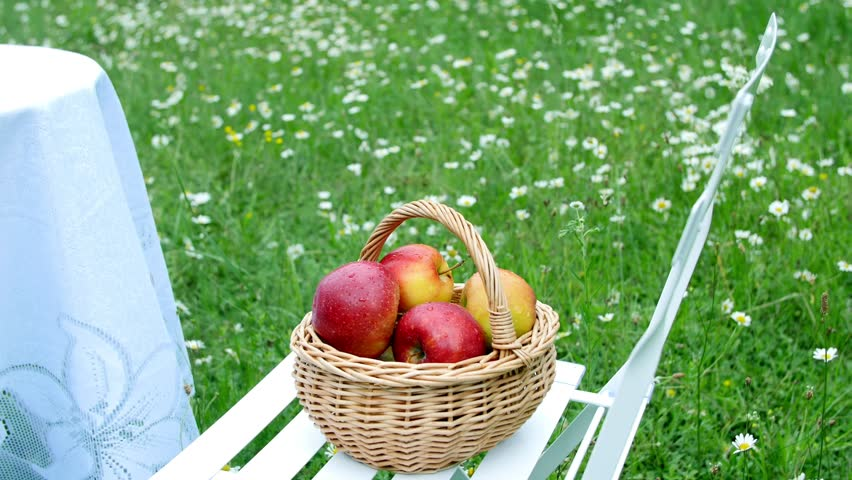 green and red apples in basket. beautiful red apples in a basket, the midst of flowering daisy field, green and basket