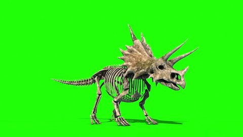 Triceratops Skeleton Dies Jurassic World Green Screen 3D Rendering Animation
