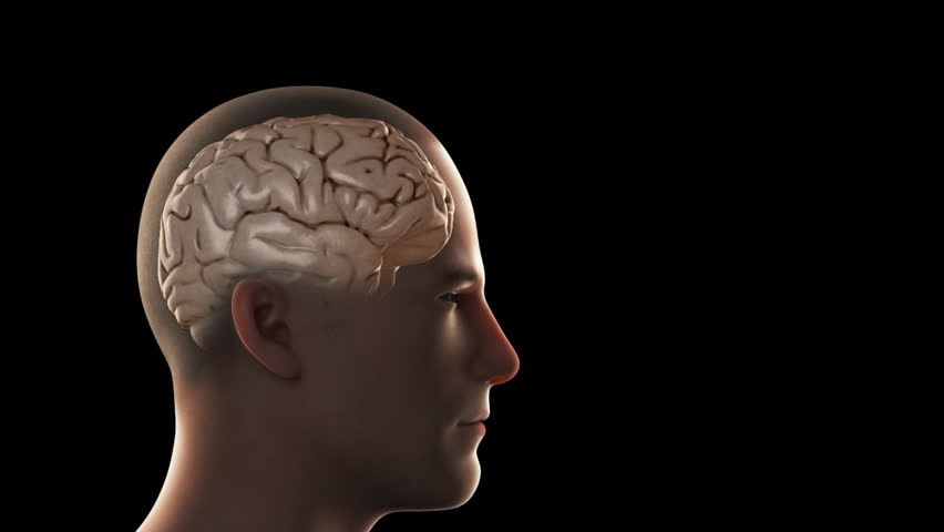 3D rendition of the human frontal lobes, responsible for planning and making decisions, viewed through a CGI of an anatomical male cranial vault (head) on a black background