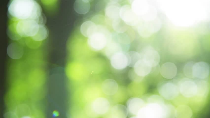 Sunlight shining through the leaves of trees, natural blurred background, Nature abstract background, nature green bokeh   | Shutterstock HD Video #28316371