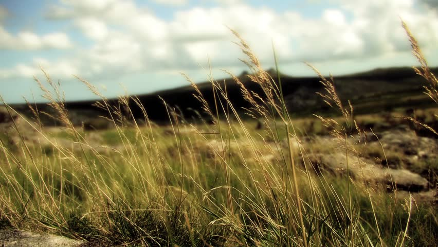 Grass Blowing with Dartmoor Rocks in Distance