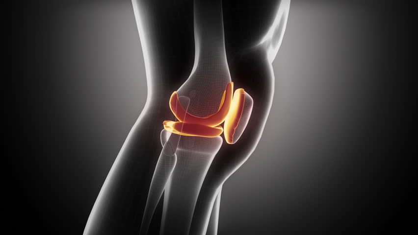 Knee anatomy in loop x ray stock footage video 2841475 shutterstock ccuart Images