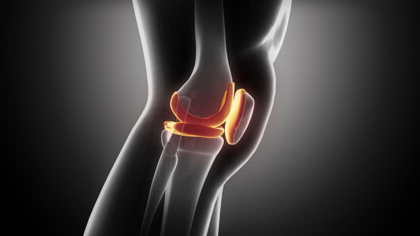 Knee anatomy in loop x-ray