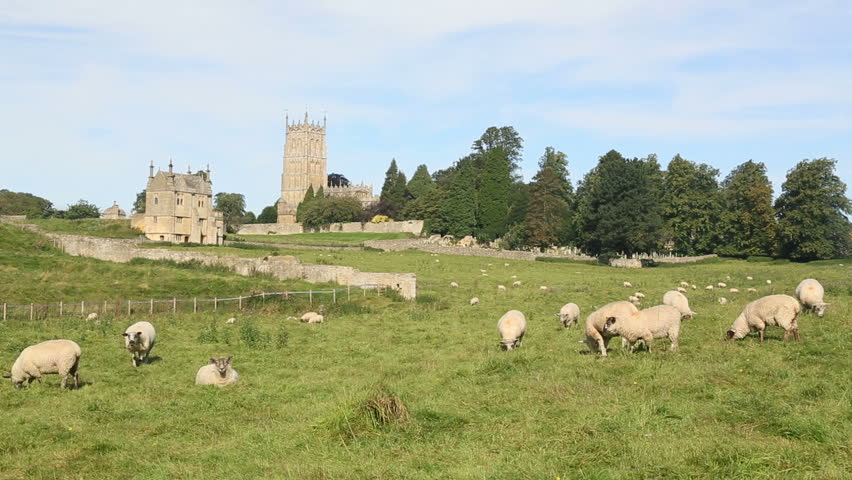 Sheep graze in meadows and fields in front of the Cotswold stone church in Chipping Campden in Cotswolds