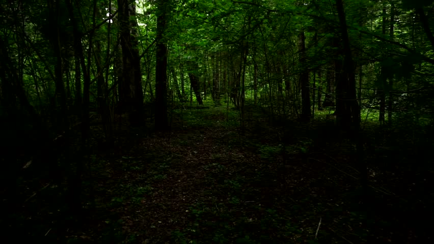 Walk in the wild forest.First person view | Shutterstock HD Video #28666567
