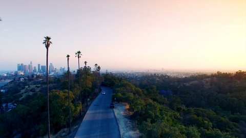 Aerial view of tall palm trees and downtown Los Angeles