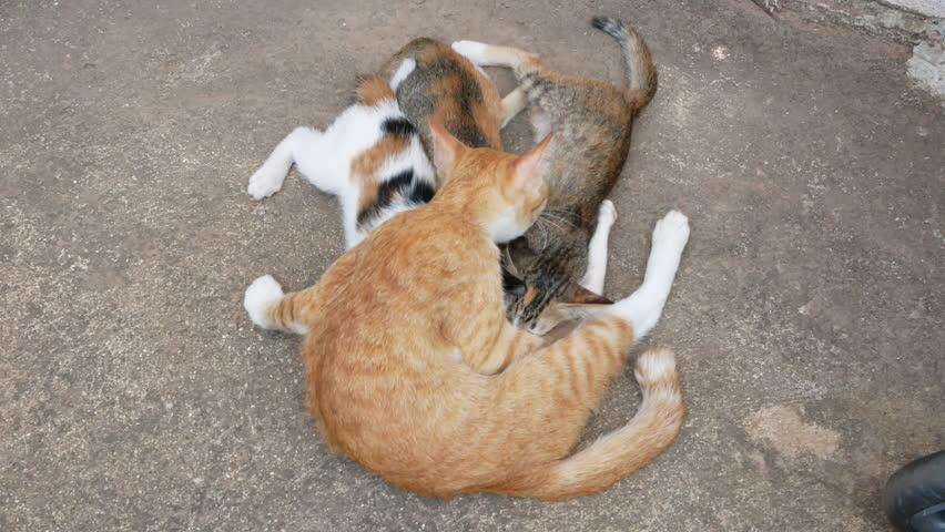 mother cat feeding her kitten and cat take care kitten baby.