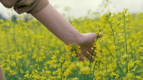 Female hand touches yellow flowers in nature close up. Woman touching beautiful yellow flowers on field slow motion. Summer meadow flowers on a meadow