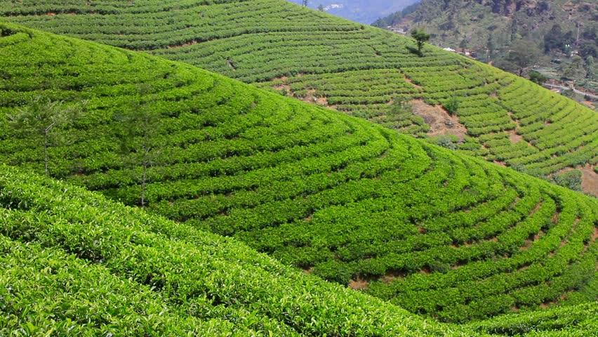 Image result for idukki hd tea