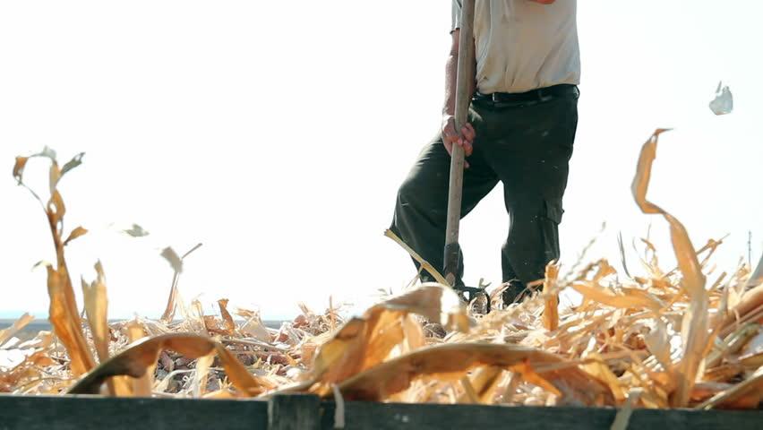 Farmer with a pitchfork. Man using a pitchfork for seasonal autumn work. HD1080p.