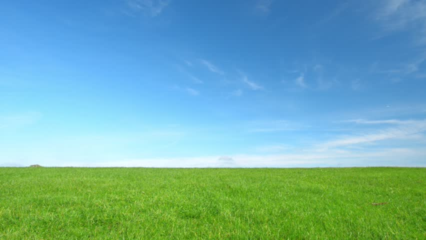 Beautiful Green Grass Clear Blue Stock Footage Video (100