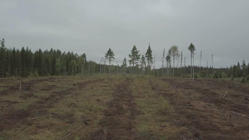 Deforestation in sweden | Shutterstock HD Video #29167474