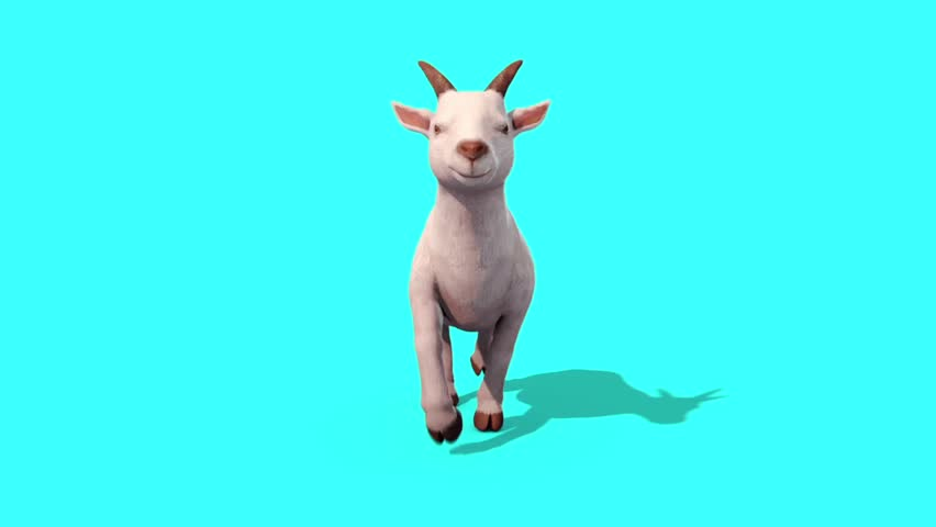 Goat Walkcycle Animal Front Blue Screen 3D Rendering Animation