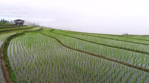 Landscape of green rice terraces field cover by a lot of mist at Baan Pa Bong Piang in Chiang Mai province, Northern of Thailand. View from flying drone