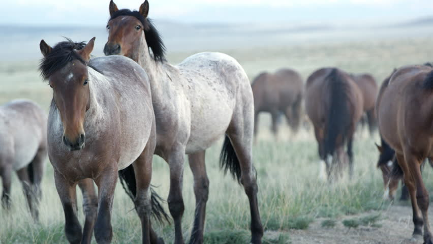 Up close view of wild horses grazing in the Utah desert. | Shutterstock HD Video #29374813